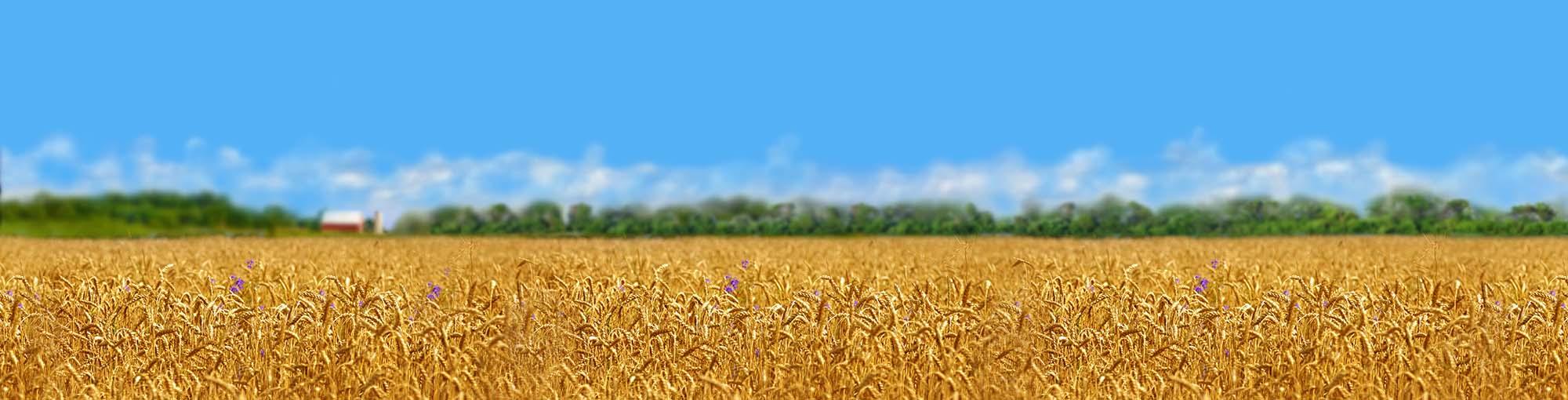 LANDSCAPE-Background